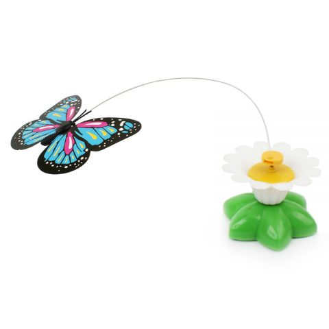 Colorful Butterfly Funny